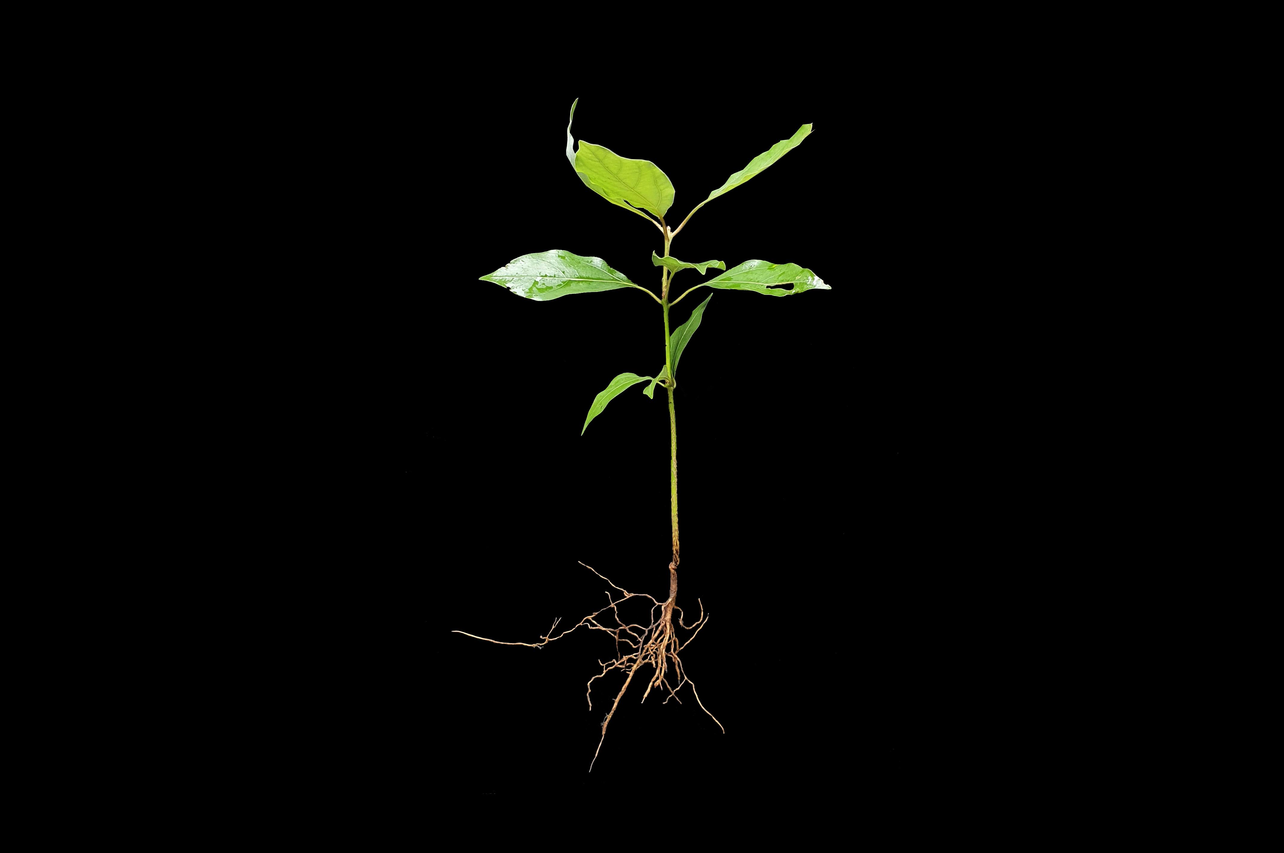 참식나무20210814-3.jpg